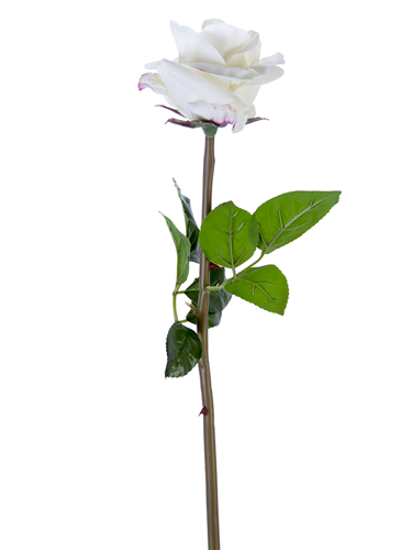 "Picture of 25"" OPEN BEAUTY ROSE STEM"