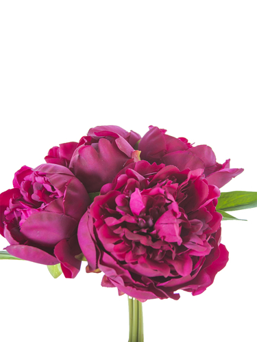 "Picture of 10"" PEONY BUNDLE"