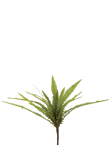 """Picture of 14"""" BUTTON FERN SPRAY"""