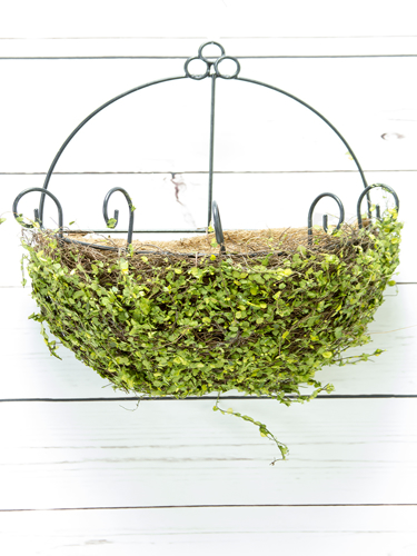 "Picture of 12"" MOSS WALL SCONCE"