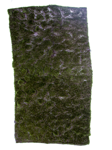 """Picture of 40"""" MOSS SHEET"""
