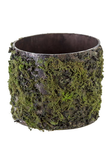 """Picture of 6"""" LOG W/MOSS POT"""