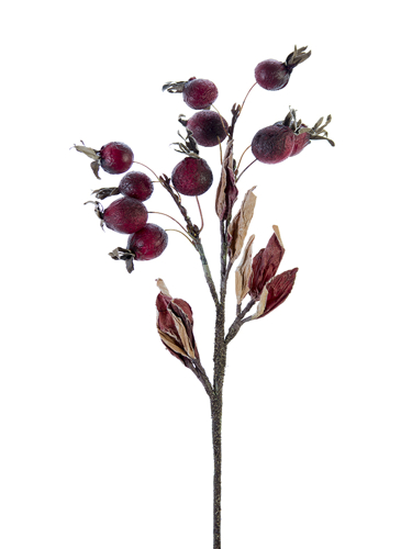 "Picture of 19"" DRIED ROSE HIPS"