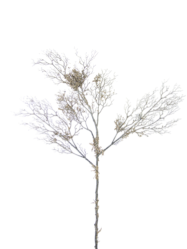 """Picture of 37"""" AGED CORAL BRANCH W/MOSS"""