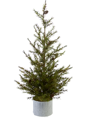 """Picture of 38"""" LARCH PINE TREE"""