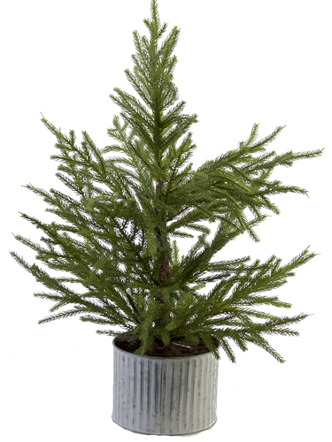 "Picture of 28"" FIR PINE TREE"