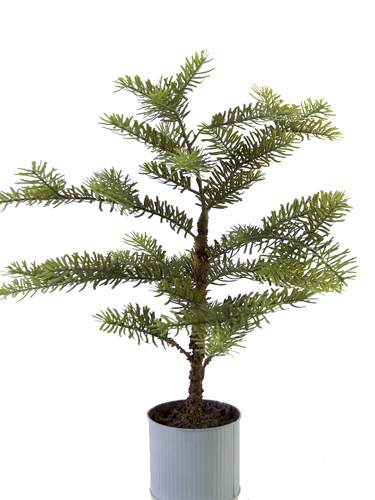 """Picture of 25"""" SITKA PINE TREE POT"""