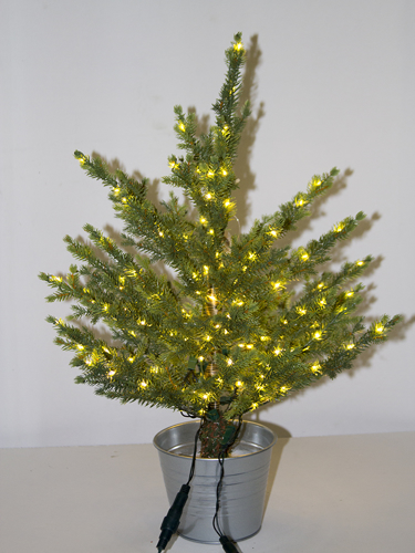 Picture of 2' BLACK SPRUCE TREE