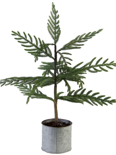 """Picture of 26"""" BALD CYPRESS TREE"""