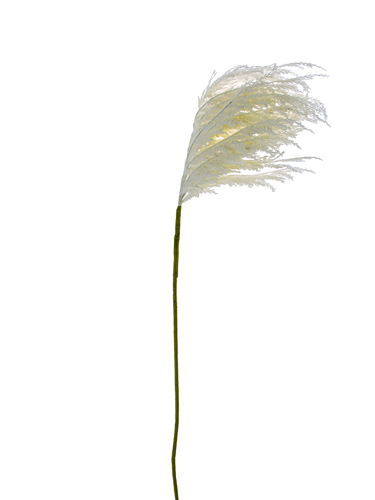 """Picture of 60"""" PAMPAS GRASS SPRAY LG"""