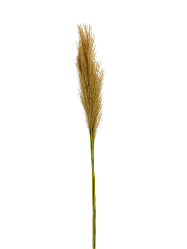 """Picture of 30"""" PAMPAS GRASS SPRAY X3"""