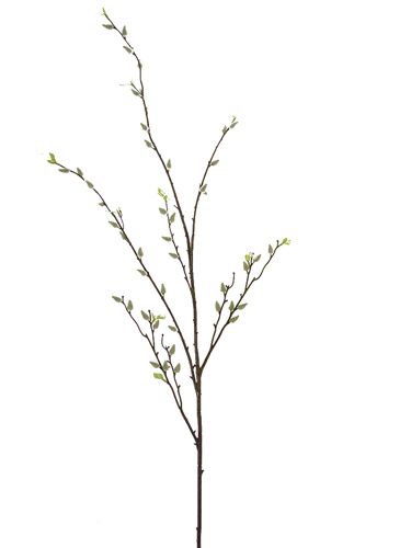 "Picture of 53.5""PUSSY WILLOW  BRANCH"