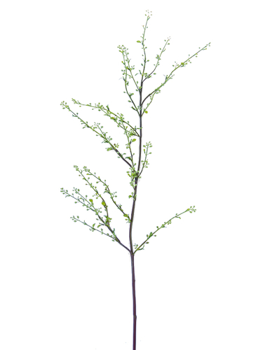 """Picture of 47"""" SPIREA BRANCH L W/SEEDS"""