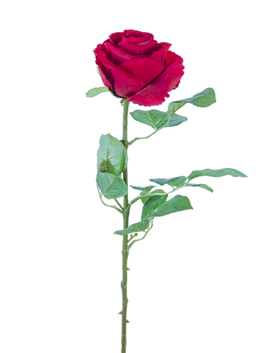 """Picture of 24"""" STANDARD ROSE"""