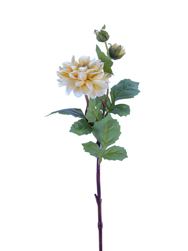 "Picture of 25"" DAHLIA STEM W/2B"