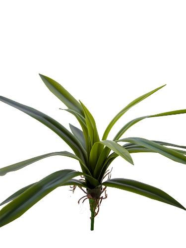 "Picture of 14"" CYMBIDIUM PLANT"