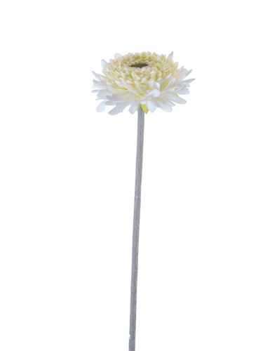 "Picture of 18.5"" CHRYSANTHEMUM STEM"