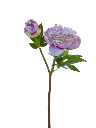 "Picture of 26"" RUFFLED PEONY X1F1B"
