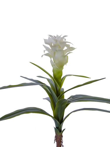 """Picture of 18"""" BROMELIAD PLANT"""