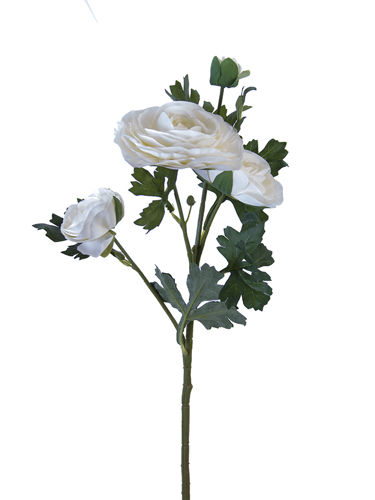 "Picture of 25"" ITALIAN RANUNCULUS"
