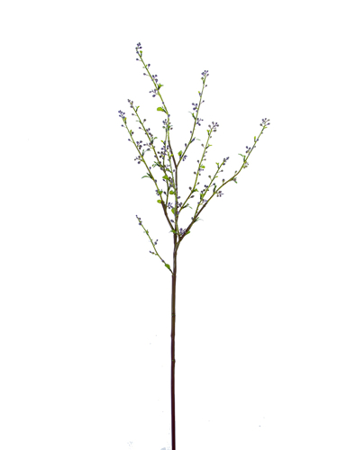 "Picture of 39"" SPIREA BRANCH"