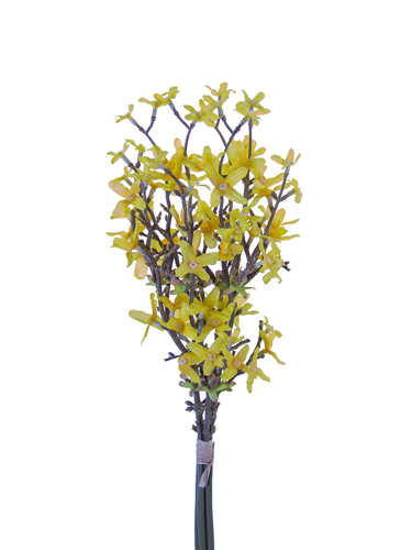 """Picture of 18"""" FORSYTHIA BUNDLE"""