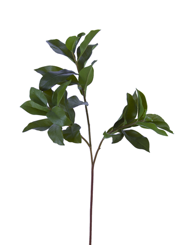 "Picture of 27"" OSMANTHUS LEAVES SPRAY X3"