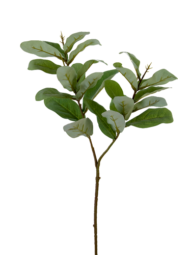 """Picture of 23.5"""" BAY LEAF SPRAY"""