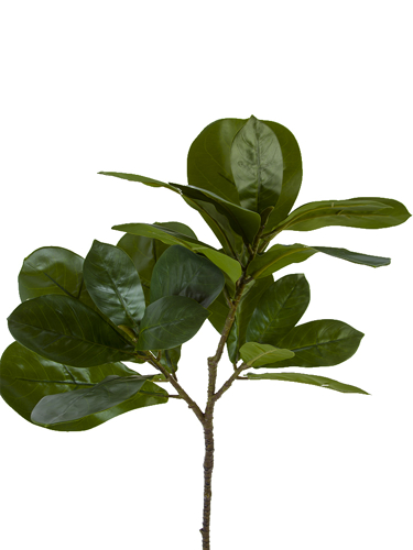"Picture of 29.5"" FIG LEAF BRANCH X3"