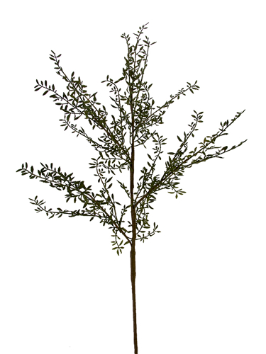 "Picture of 47"" ROSEMARY BRANCH"
