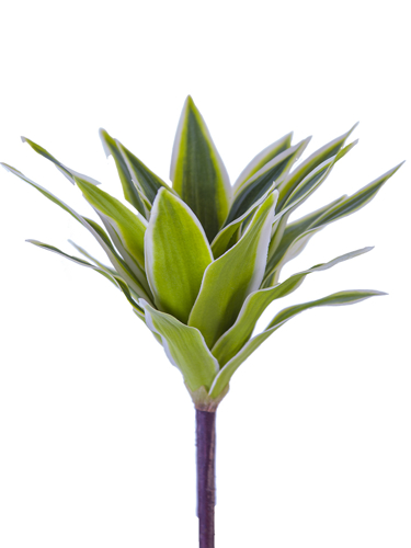 "Picture of 10"" TRADESCANTIA BUSH"