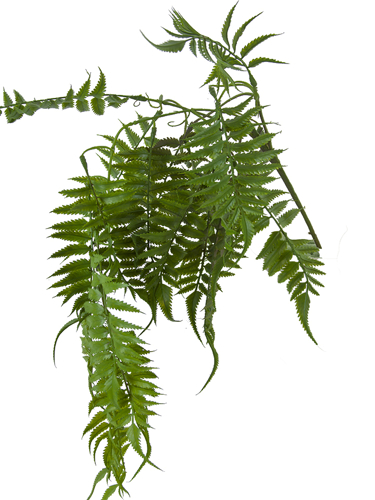 "Picture of 34"" HANGING BOSTON FERN"