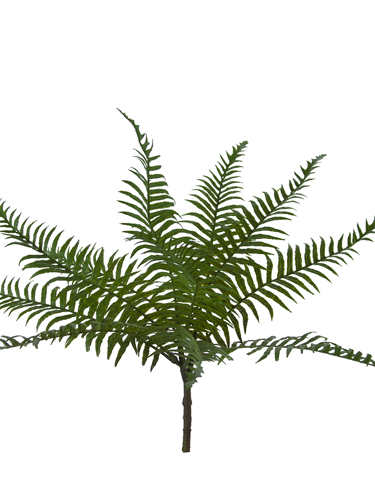 """Picture of 17.5"""" TROPICAL FERN BUSH"""