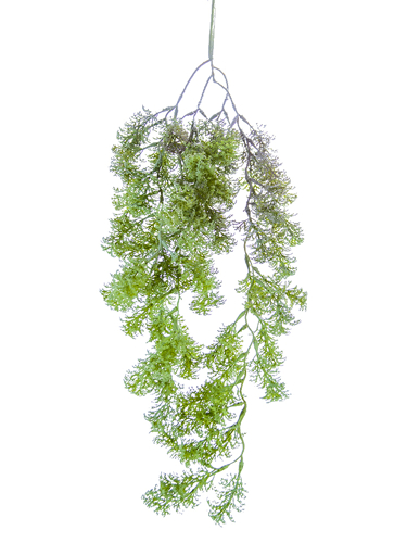 "Picture of 25"" HANGING BUSHY FERN"