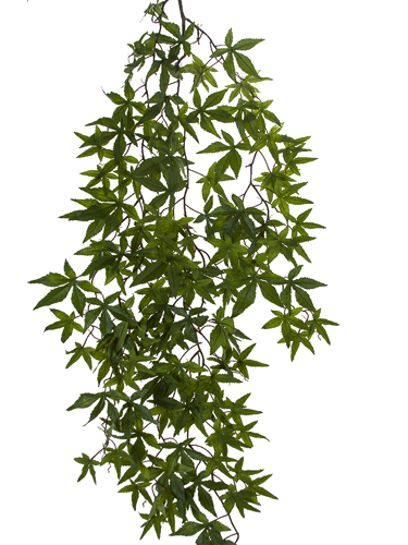 """Picture of 55"""" HELIX MAPLE IVY BUSH"""
