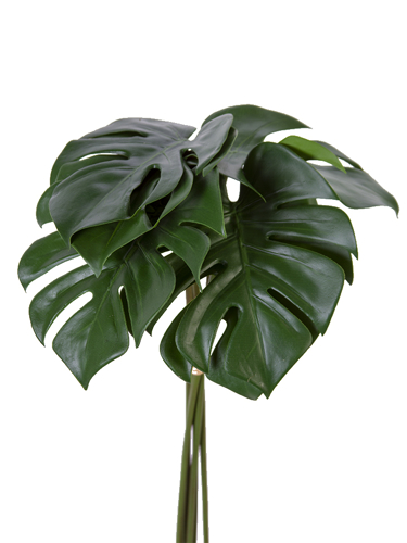 "Picture of 20.5""MONSTERA LEAF BUNDLE"