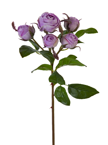 """Picture of 22"""" ENGLISH ROSE BUDS X6"""