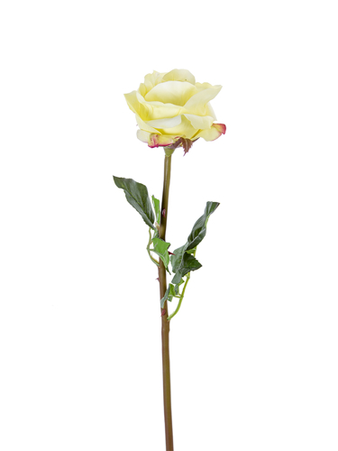 """Picture of 25"""" OPEN BEAUTY ROSE STEM"""