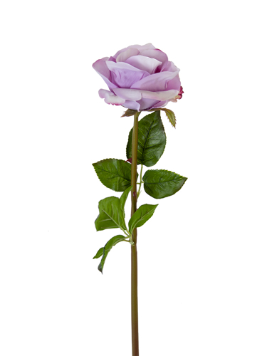"Picture of 25"" BEAUTY ROSE BUD STEM"