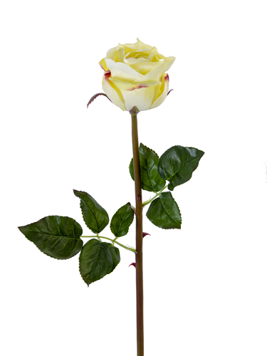 """Picture of 25"""" BEAUTY ROSE BUD STEM"""