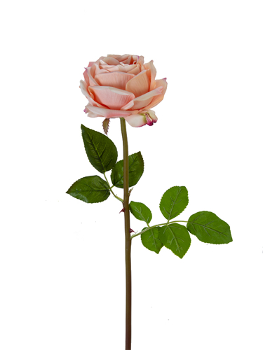 """Picture of 27"""" HEDGEROW ROSE STEM"""