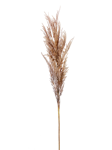 "Picture of 43"" DRIED WHEAT SPRAY"