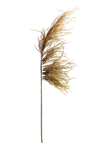 """Picture of 50"""" DRIED PLUME GRASS SPRAY"""