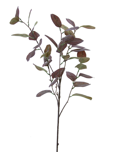 "Picture of 35"" EUCALYPTUS LVS SPRAY"