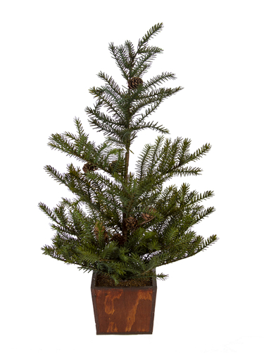 "Picture of 24"" SPRUCE TREE"