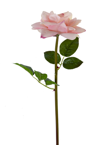"""Picture of 26"""" OPEN ROSE STEM"""