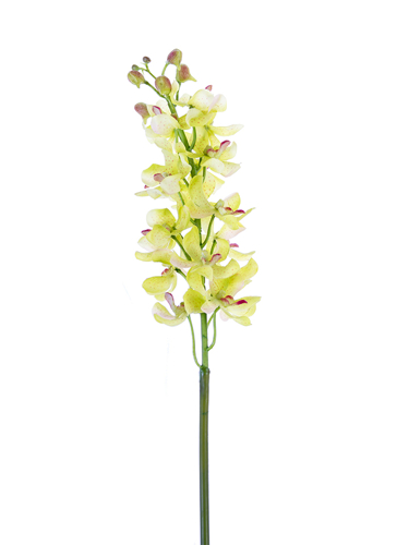 """Picture of 27.5"""" MOKARA ORCHID"""