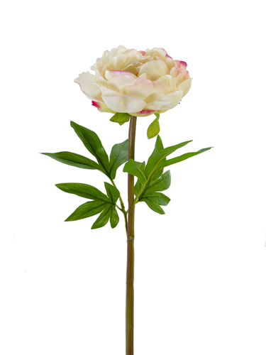"""Picture of 26"""" PEONY STEM"""