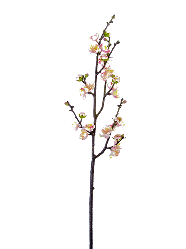 """Picture of 35"""" PLUM BLOSSOM BRANCH"""