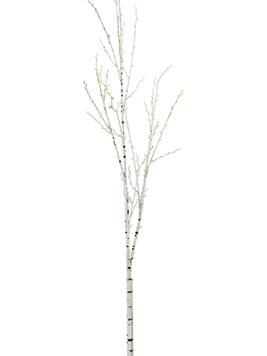 """Picture of 66.5"""" BIRCH BRANCH"""